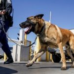 K-9 police units face pressure to change amid drug policy reform