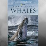 Just in time for Earth Day, Disney+ presents the NatGeo series Secrets of the Whales