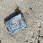 Over 30 kilograms of cocaine worth $1.2M wash ashore during turtle nesting survey at Cape Canaveral